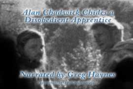 Alan Chadwick gently chides a disobedient apprentice